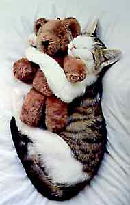 cat with teddy